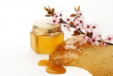 تحقیق راجع به فرآوری محصول زنبور عسل